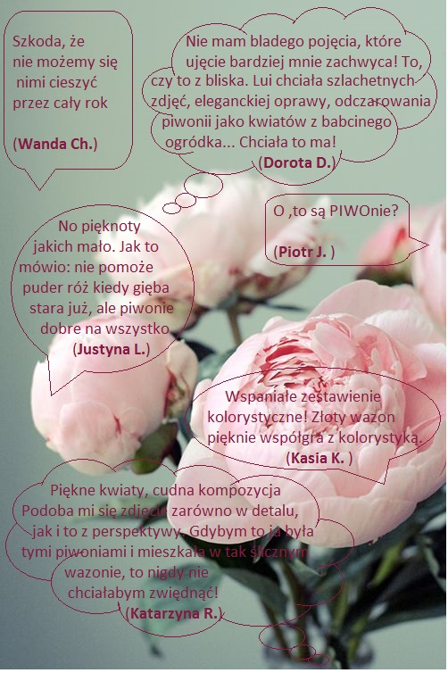 komentarze do peony party
