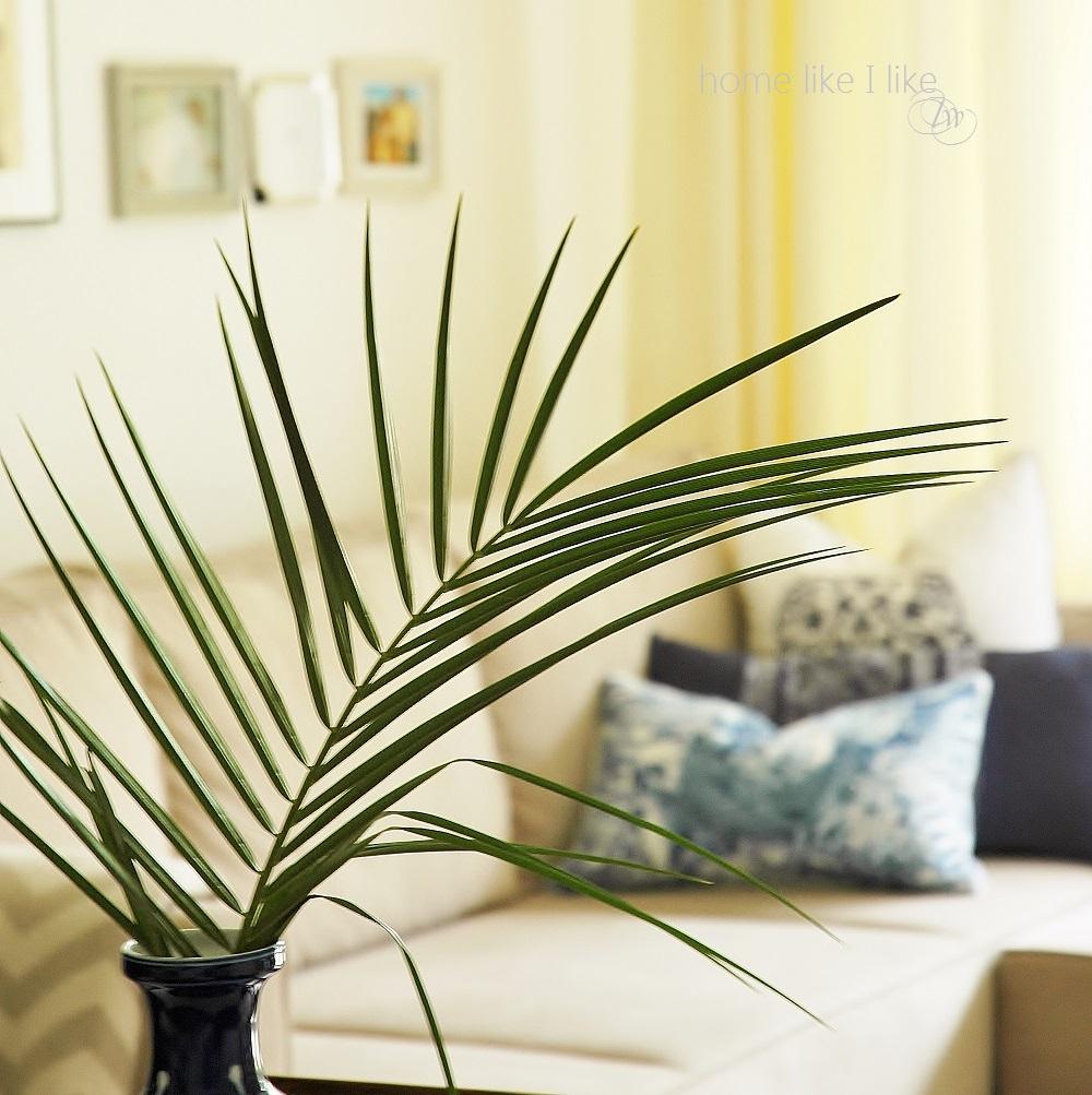 Palma kokosowa - liście egzotyczne