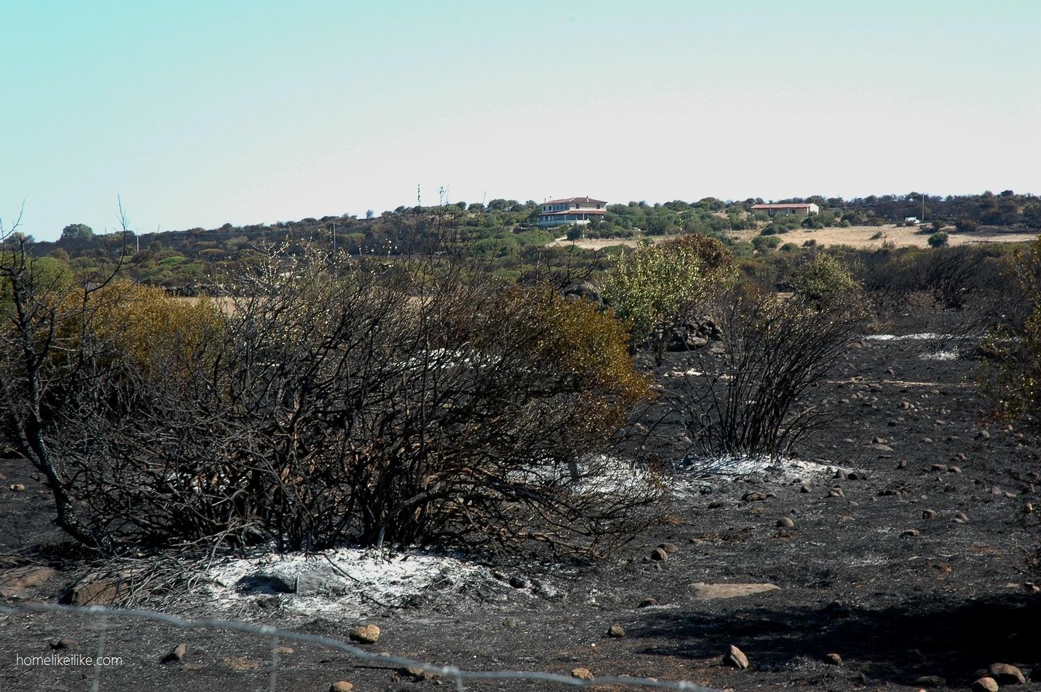 pożar na sardynii - homelikeilike.com