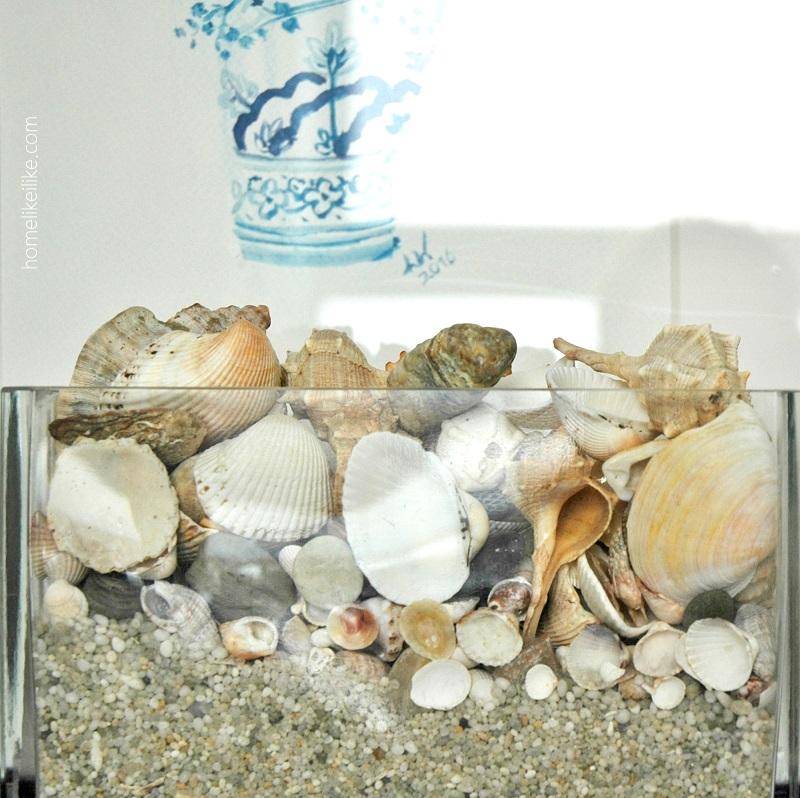 shells - homelikeilike.com