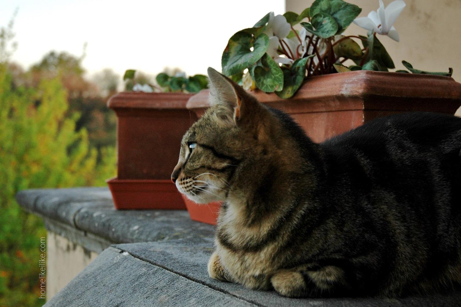 tuscany cat - homelikeilike.com