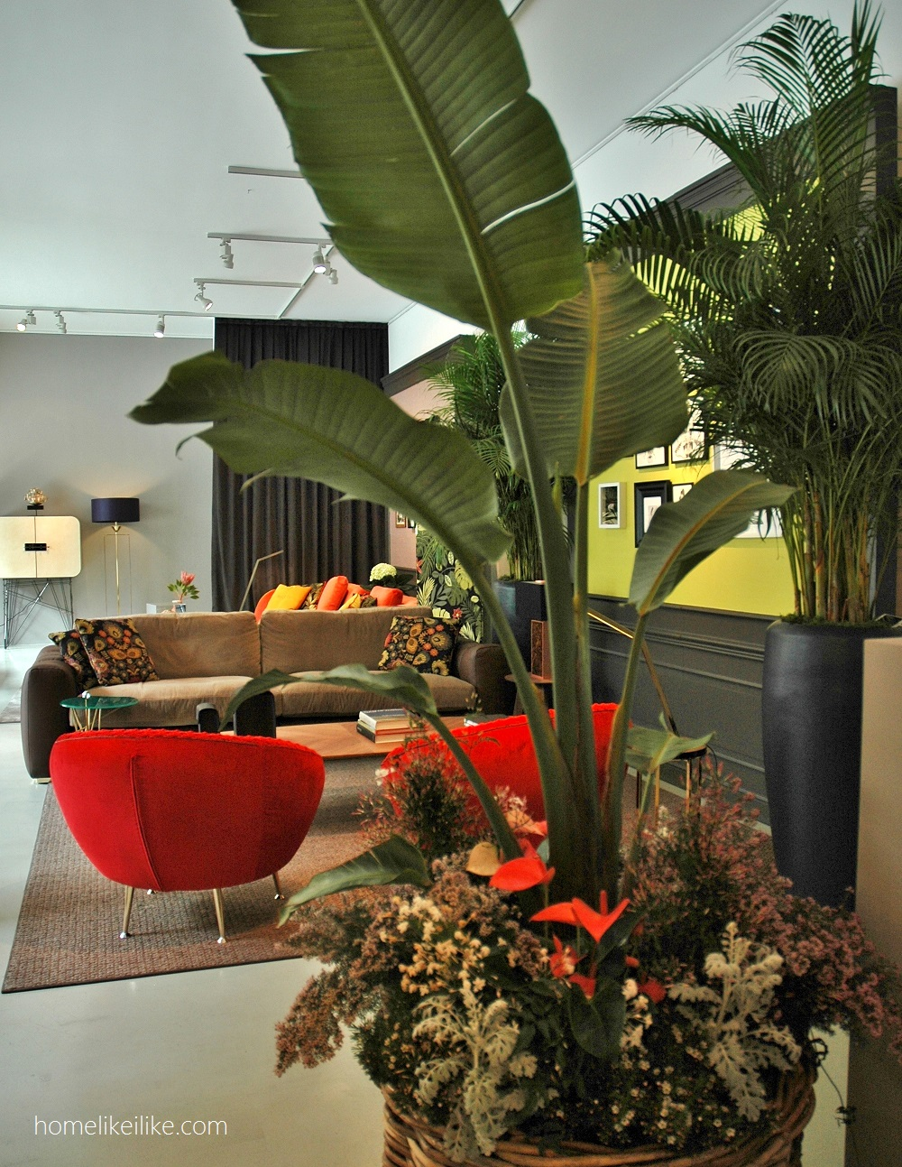 piante tropicali della black tie - homelikeilike.com